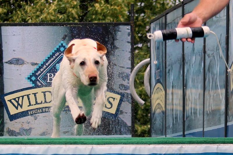 Dock Dogs at Fair-009.JPG