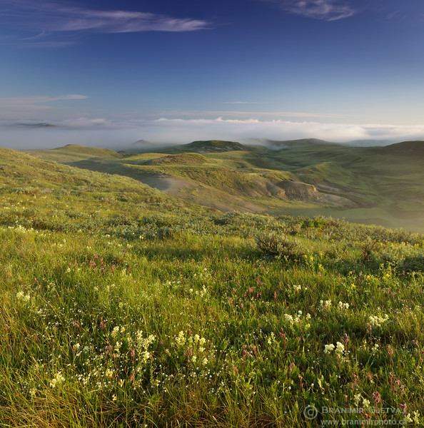Native prairie with wildflowers in bloom. Grasslands National Park, Saskatchewan