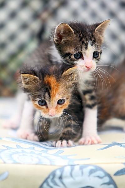 kittens_010-1.jpg