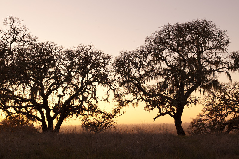 Oak Tree Sunset, Anadel State Park, CA