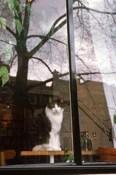 Neighborhood Watch in Amsterdam