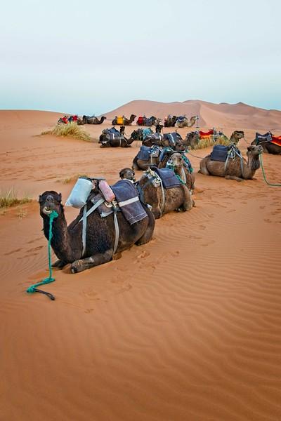 sahara desert morocco 2018 copy.jpg