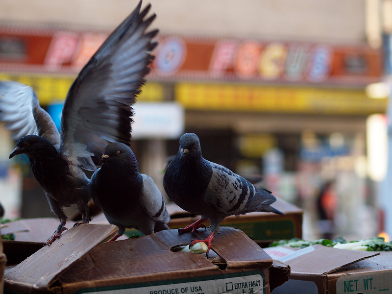 These guys were having breakfast courtesy of some of the Chinatown restaurants. Delivery trucks left the produce on the sidewalk well before they opened.