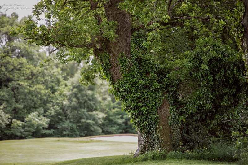 AT Golf Photos by Aniko Towers Vale Resort Golf Course Wales National-44.jpg
