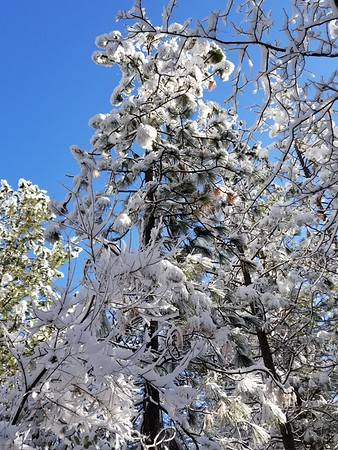 Snowy February Morning 2019