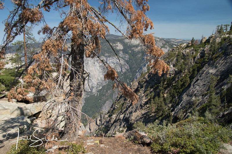 Yosemite 2018 -41.jpg