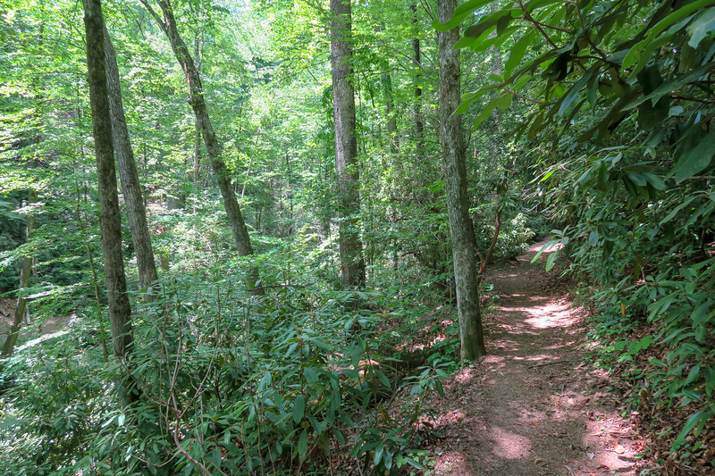 Andy Cove Nature Trail -- 2,220'