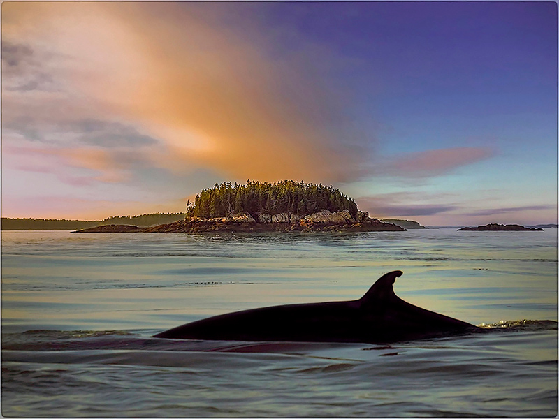 23 whale watch canada