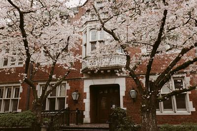 Spring Cherry Blossoms: 2020
