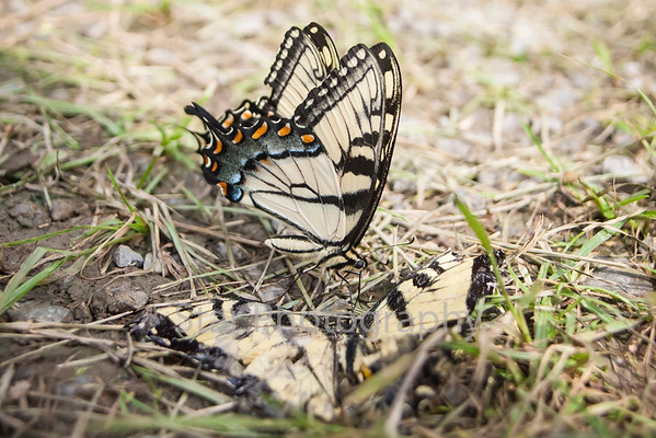 Butterfly Funeral 08-08-13