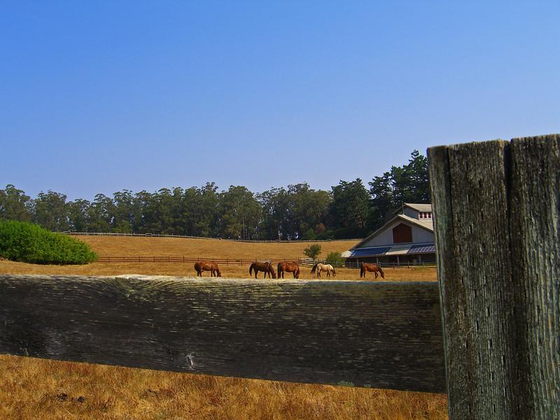 Historic Morgan Horse Ranch, Bear Valley, Point Reyes National Seashore