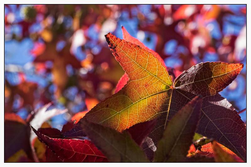 November 17 - Autumn.jpg