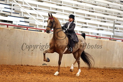 24. Open English Pleasure W/T ( Saddle or Hunt Seat) (Any breed)