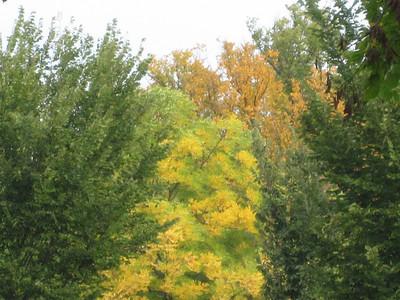 Autumn Glory Be!