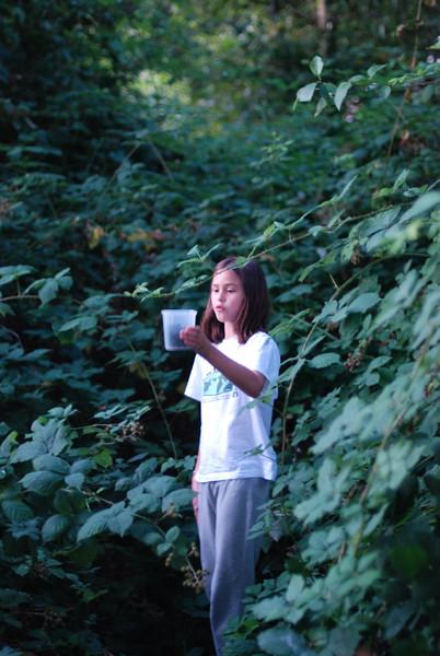 r picking blackberries