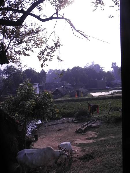 india2011 781.jpg