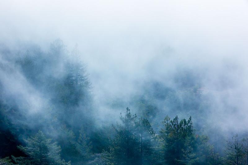 Big Sur Foggy Pines.jpg