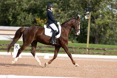 Horse 362
