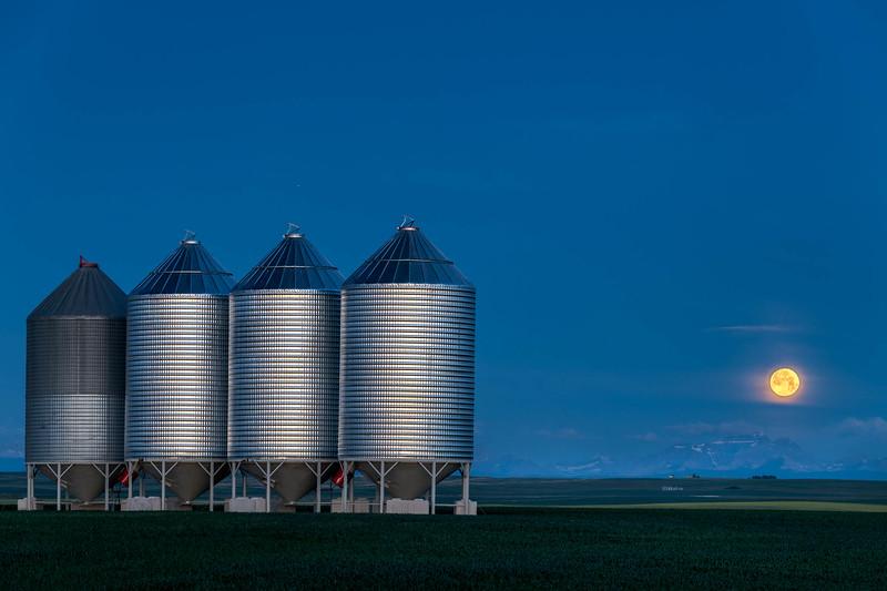 barley 36.jpg