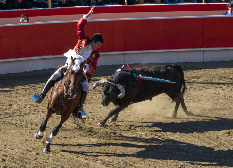 Cavaleiro Luis Rouxinol exults as the second bandarilha sticks to the velcro.