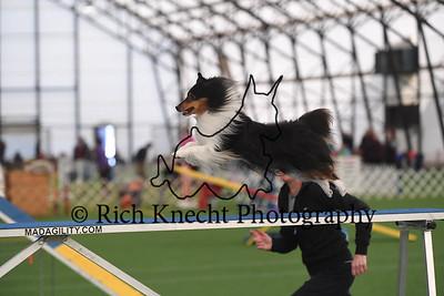 York County Dog Training Club AKC Agility Trial March 17-19