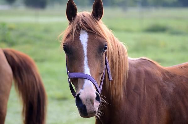 Horses June 2013