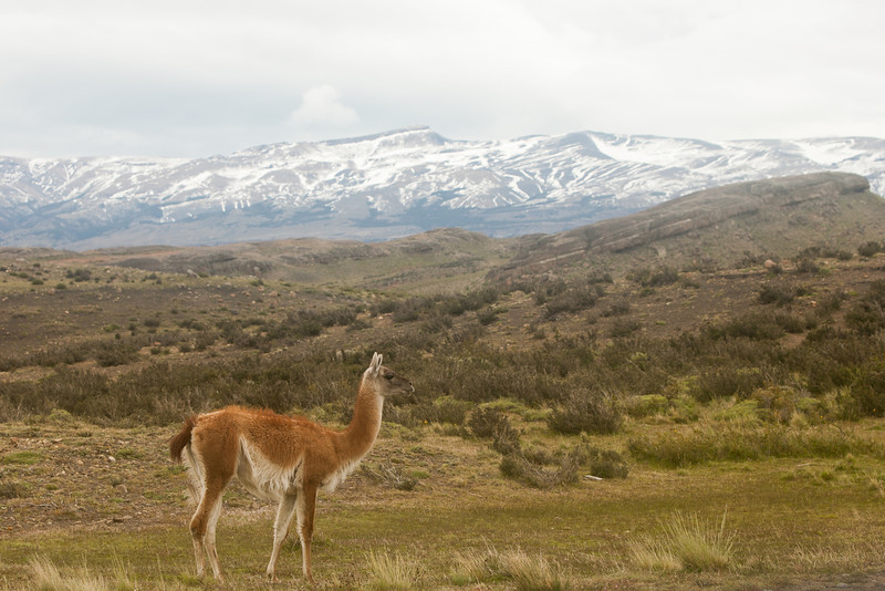 patagonia-1164.jpg