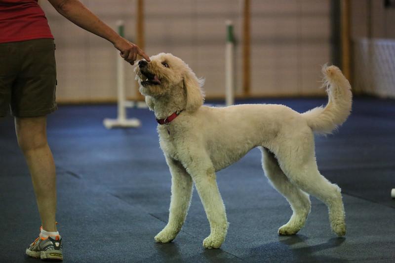 dogs_06142016-72.jpg