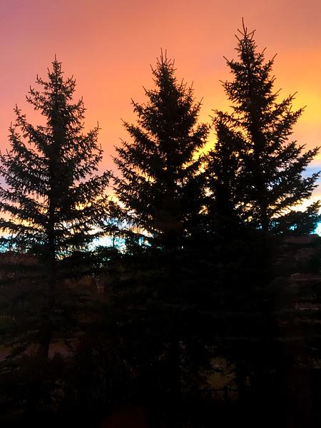 Pine Trees at Sunrise.jpg