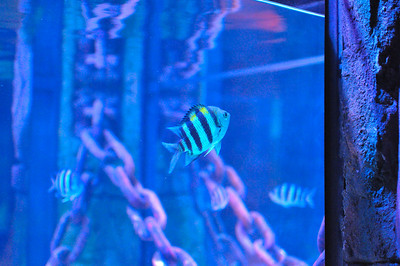 2013-02-05 - Sea Life Aquarium