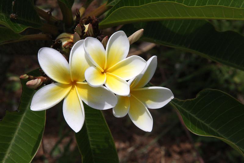 Madagascar, Fauna & Flora 1 Oda.jpg