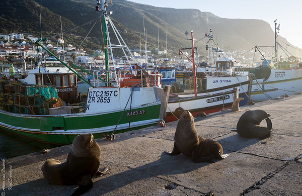 South Africa - Kalk Bay - Western Cape