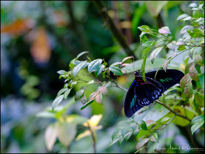 200104 KL Butterfly Park 15.jpg