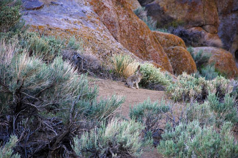 Eastern Sierra may 2011