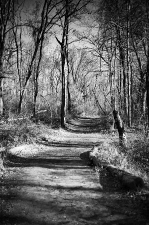 Watchung Reservation in B&W