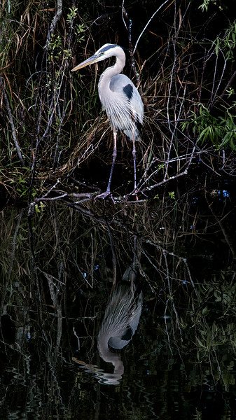 Everglades_069_IMG_0778_Everglades.jpg
