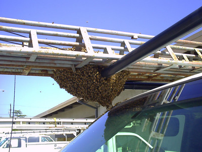 2008 Feb 24 Bees
