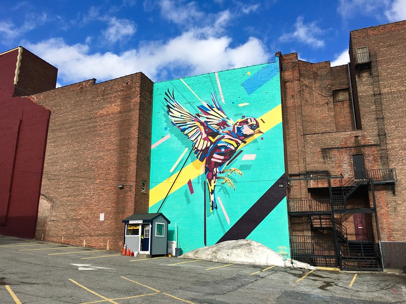 Bird #6, a mural by Arlin in Worcester, Massachusetts