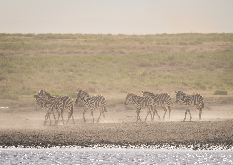Tanzania_Feb_2018-378.jpg