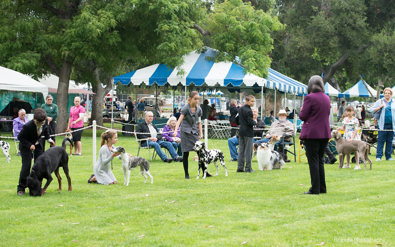 2019 Pasadena Kennel Club-8356.jpg