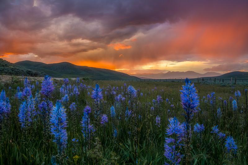 Little Camas, Idaho