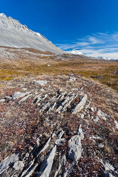 Wilcox Pass in Jasper National Park.