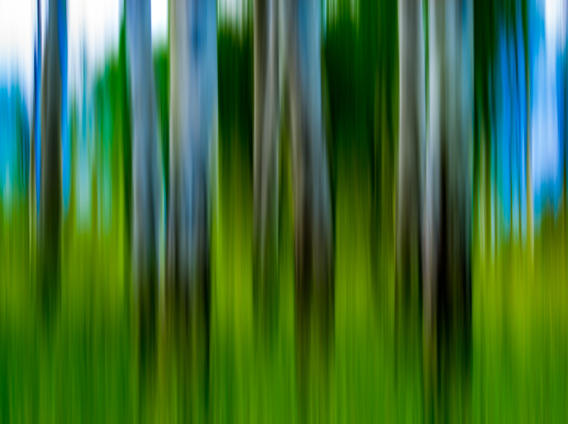 Tree Panning Abstract Artistry