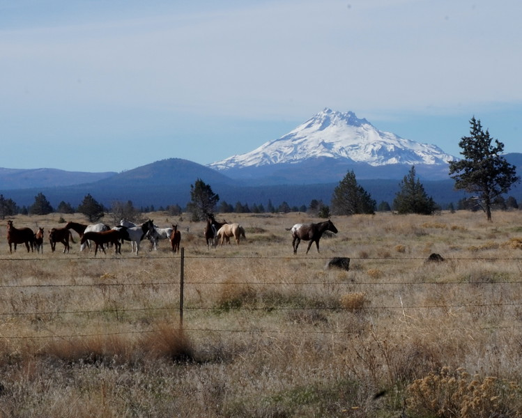 Road to Columbia River Gorge 1.JPG