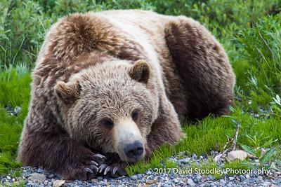 Denali National Park Critters