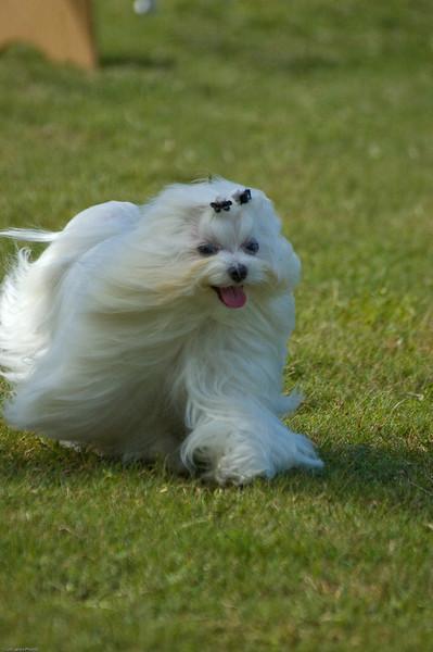 Boca Raton Dog Show-40.jpg