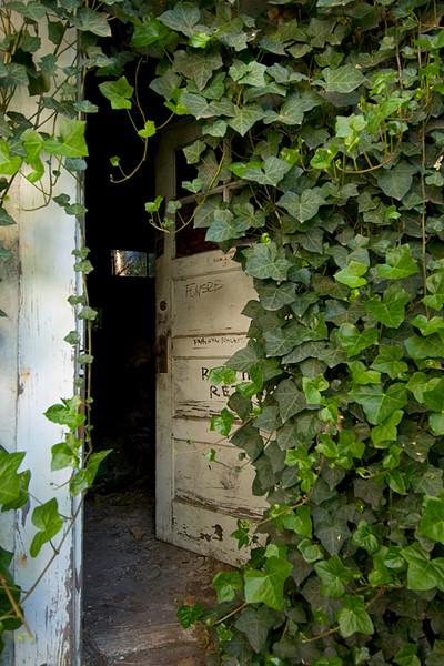Ivy covered door, Dunsmuir, CA