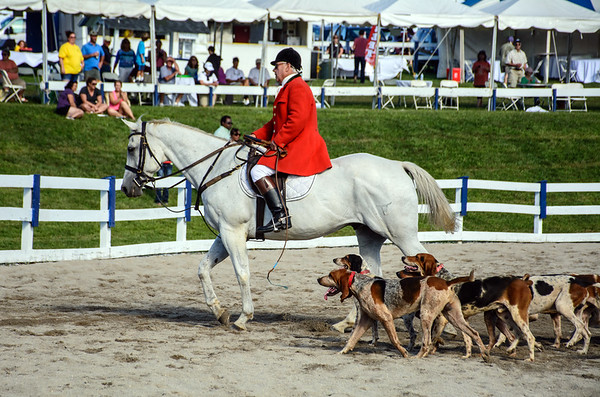 The Mounted Parade of the Hounds