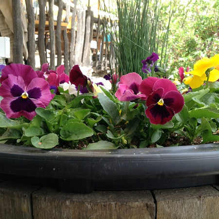 RiverCafe_Garden2014_Pansies.jpeg