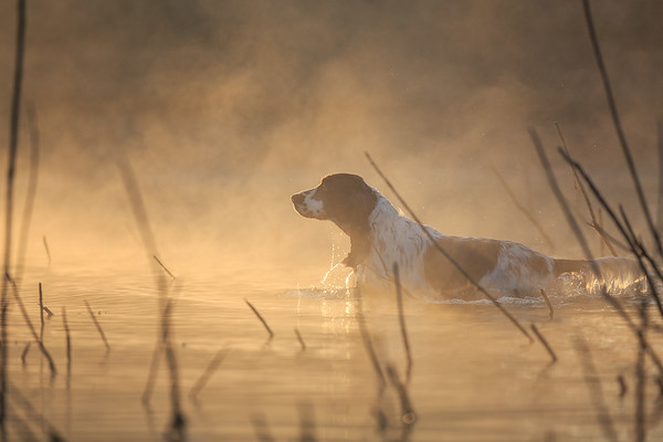 Dog Photographer of the Year 2015